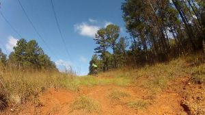 Scene from the Power lines trail.