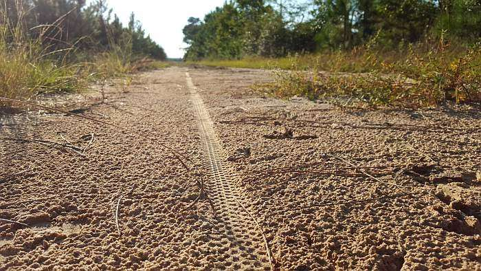Tread pattern of the Panaracer and turkey tracks!