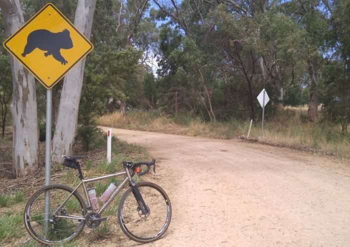 The only Koala spotted during the ride.
