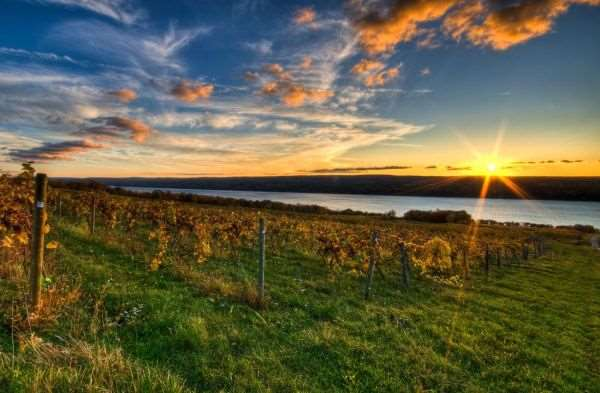 Farm to Fork Fondo: Finger Lakes - Burdett, New York @ Atwater Winery | Burdett | New York | United States