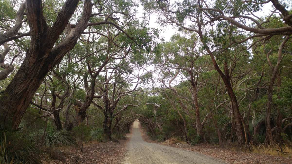 fleurieu peninsula gravel cycling