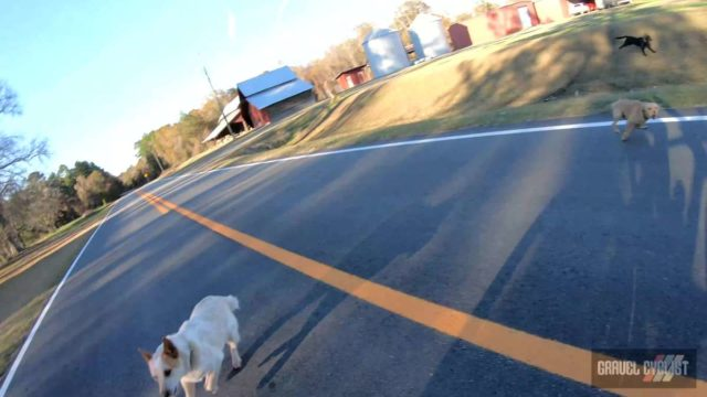 dogs chasing cyclists