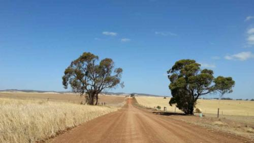 barossa valley gravel cycling